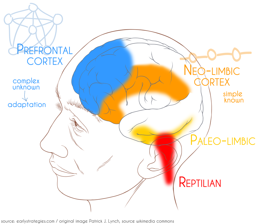 The Simplest Human Brain Anatomy Representation I've Ever Come Across –  Better Mammals